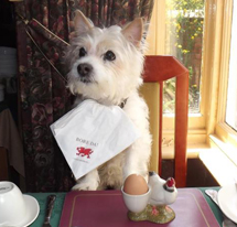 Hillcrest Dog Friendly Guest house B&B Denbighshire North Wales
