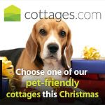 pet friendly holiday for Christmas