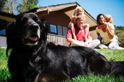 holiday park and lodges dogs allowed