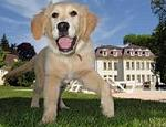Its true there are Hotels that allow dogs & pet friendly Bed and Breakfast accommodation